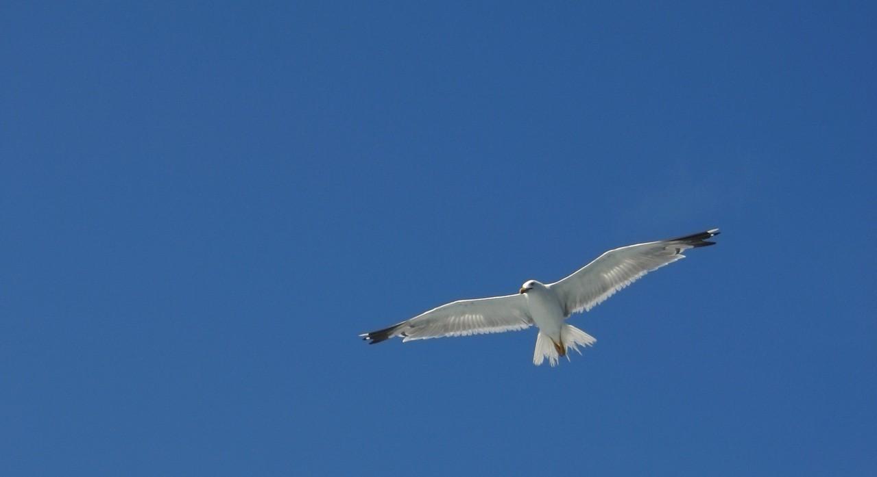 Ptasie ciekawostki