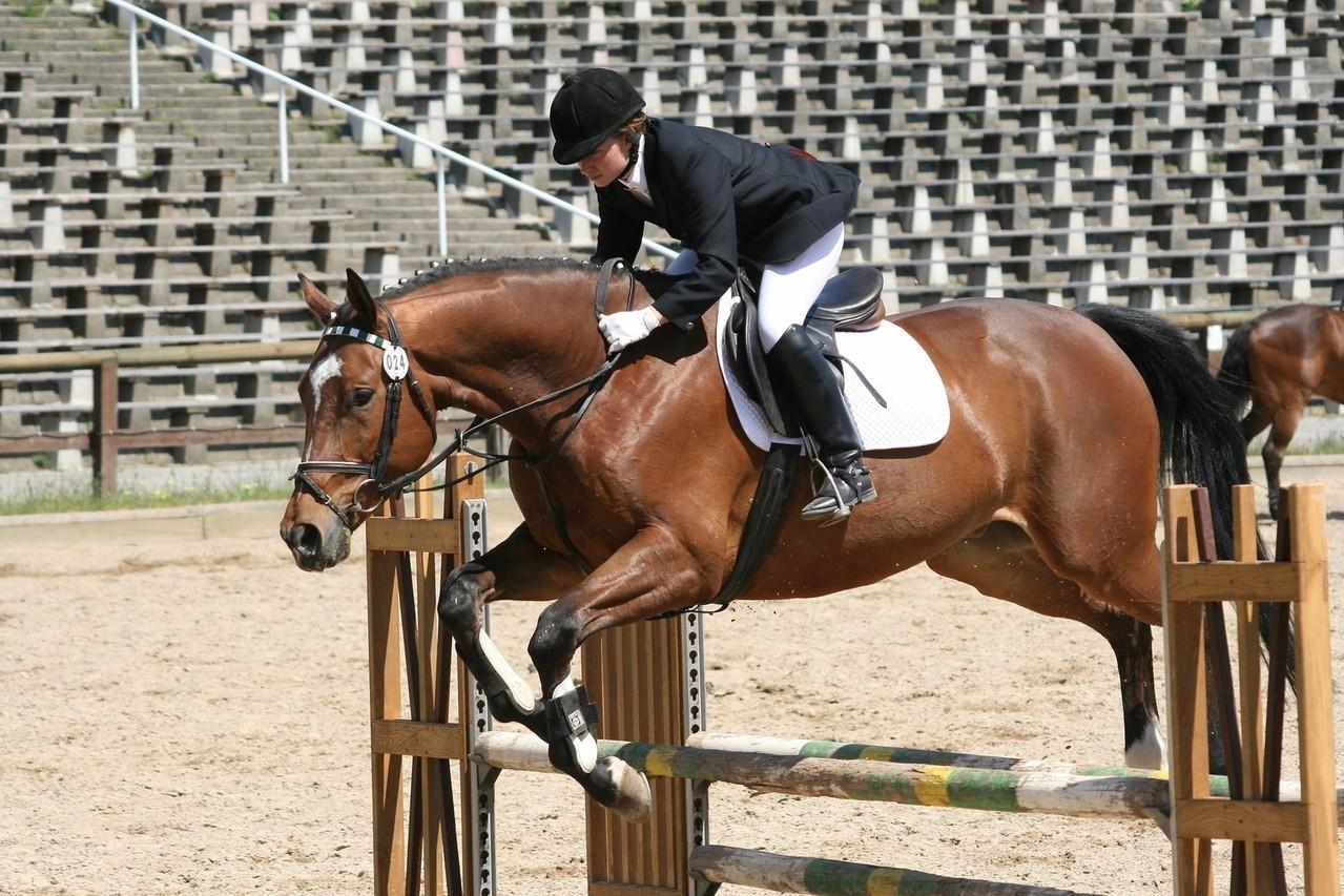 Cechy fizyczne koni arabskich