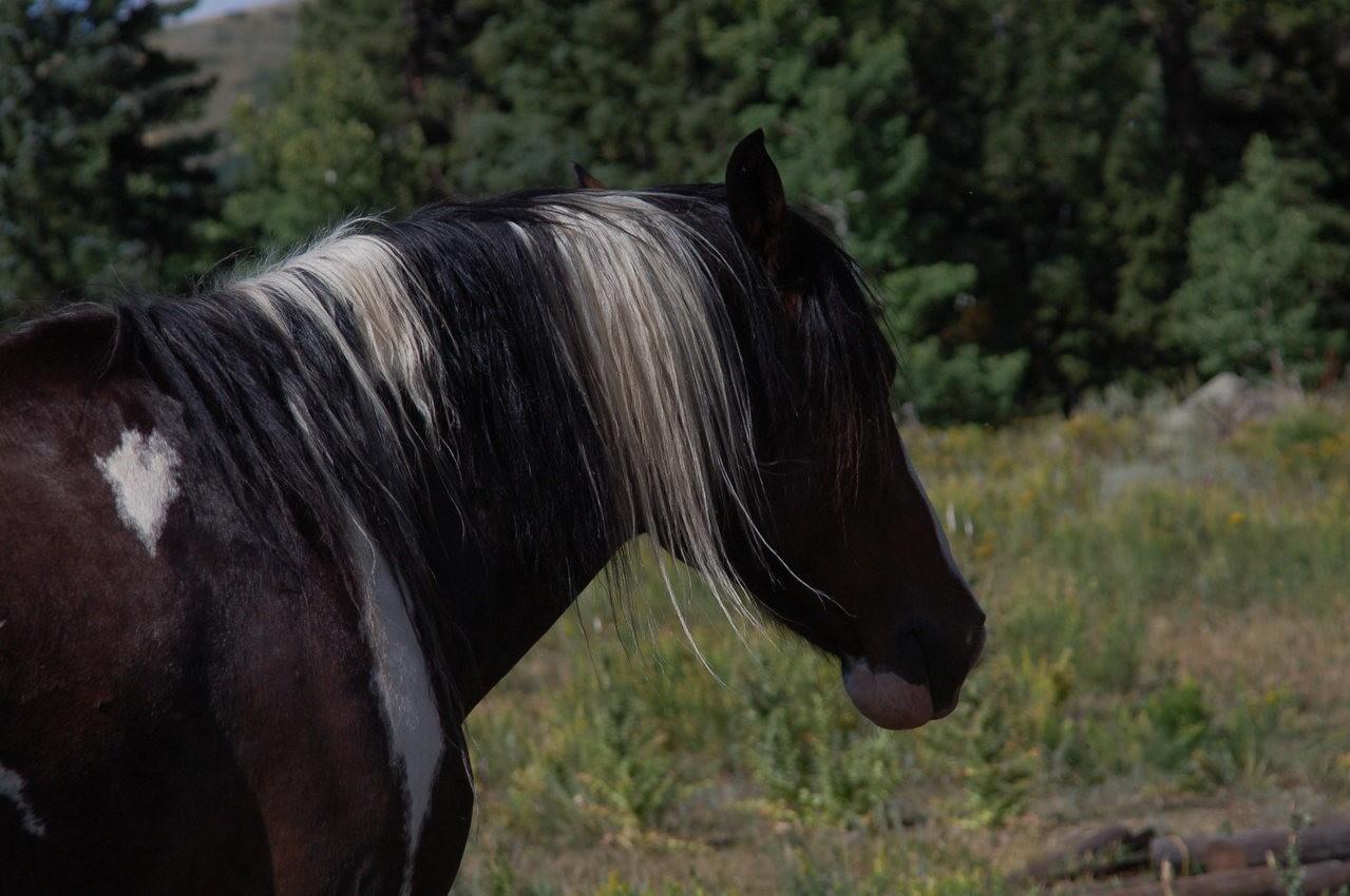 Kilka ciekawostek o koniach rasy arabskiej
