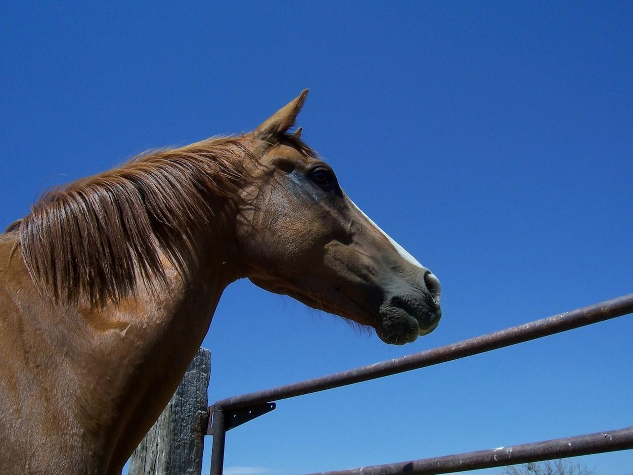 Podczas zawodów konnych
